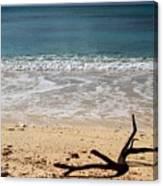Beach At Grand Turk Canvas Print