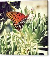 Beach Butterfly Canvas Print