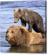 Bear Back Rider Canvas Print