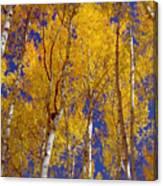 Beautiful Fall Season Nature Renews Itself  Theme Green Trees Reaching For The Sky  Save The Environ Canvas Print