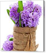 Beautiful Hyacinths Canvas Print