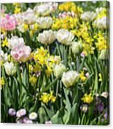 Beautiful Spring Flowers Canvas Print