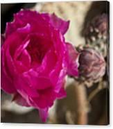 Beavertail Cactus Blossom 2 Canvas Print
