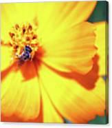 Bee Orange Canvas Print