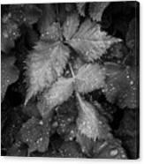 Bellevue Botanical Garden Leaves 6395 Canvas Print