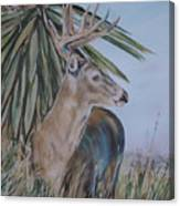 Berry Buck Canvas Print