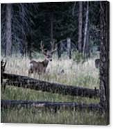 Big Buck Canvas Print