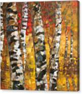 Birch Trees In Golden Fall Canvas Print