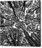 Black And White Nature Detail Canvas Print