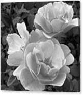 Black And White Roses 2 Canvas Print