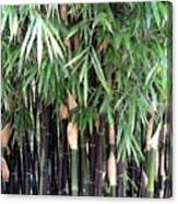 Black Bamboo Canvas Print