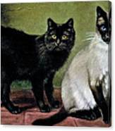 Black Manx And Siamese Cats Canvas Print