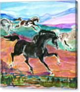 Black Pony Canvas Print