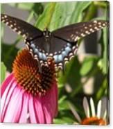 Black Swallowtail Butterfly Canvas Print