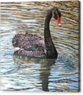 Black Swan On Water Canvas Print