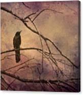 Blackbird 2 Canvas Print