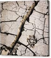 Blair Cracked Mud 1685 Canvas Print