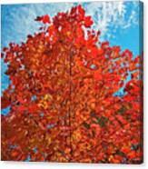 Blaze Of Glory Canvas Print