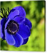 Blue Bonnet Canvas Print