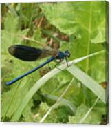 Blue Dragonfly On Leaf Canvas Print