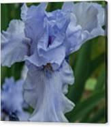 Blue Iris 2 Canvas Print