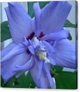 Blue Rose Of Sharon Canvas Print