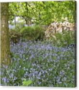 Bluebells On Dartmoor Canvas Print