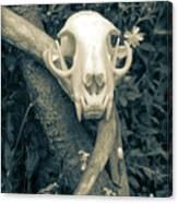 Bobcat Deer Antler Canvas Print
