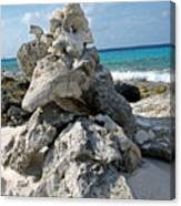 Bonaire Coral And Shells 3 Canvas Print