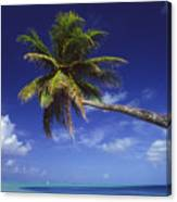 Bora Bora, Palm Tree Canvas Print