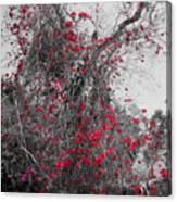 Bougainvillea Invasion Canvas Print