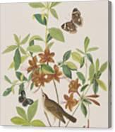 Brown Headed Worm Eating Warbler Canvas Print