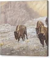 Buffalo Under The Alpenglow Canvas Print