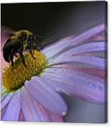 Bumble Bee On Flower Canvas Print