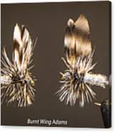 Burnt Wing Adams Canvas Print