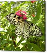 Butterfly-1 Canvas Print