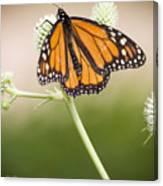 Butterfly In Wait Canvas Print