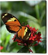 Long Winged Beauty Canvas Print
