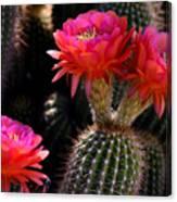 Sonoran Spring Canvas Print