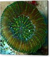 Cactus Ring Coral Canvas Print
