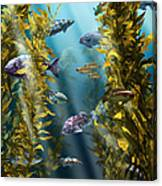 California Kelp Forest Canvas Print