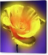 Californian Poppy. Canvas Print