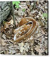 Camouflaged Fawn Canvas Print