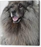 Canine Beauty Canvas Print