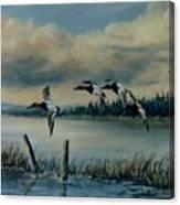 Canvasbacks Over Lake Earl Canvas Print
