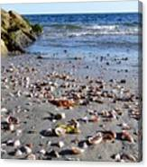 Cape Cod Beach Finds Canvas Print