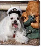 Captain Maltese Dog  Canvas Print