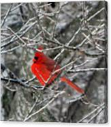 Cardinal On Icy Branches Canvas Print