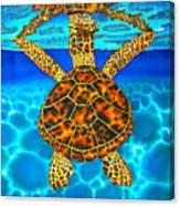 Caribbean Hawksbill Sea Turtle Canvas Print