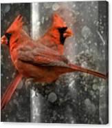 Cary Carolina Cardinals  Canvas Print